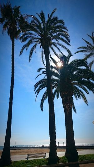 Trees Palm Trees Sunlight Sun Blue Blue Sky Sunny Day Sea February In Spain Sitges Sitges Spain