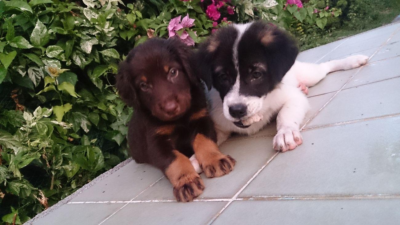 Dobermann Puppies My Pets :) Cute Pets