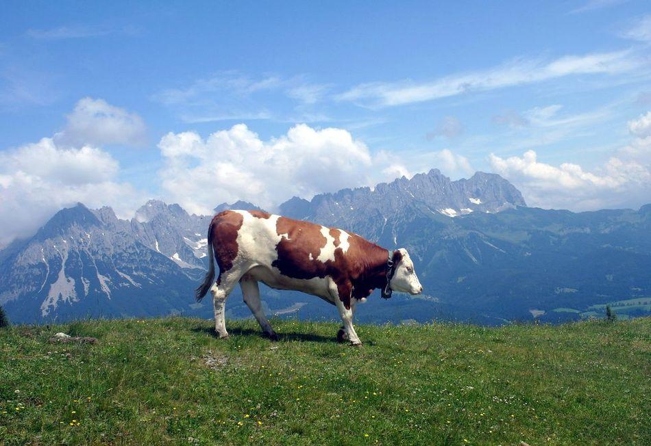 Beautiful stock photos of kühe, Animal Themes, Beauty In Nature, Cloud - Sky, Cow