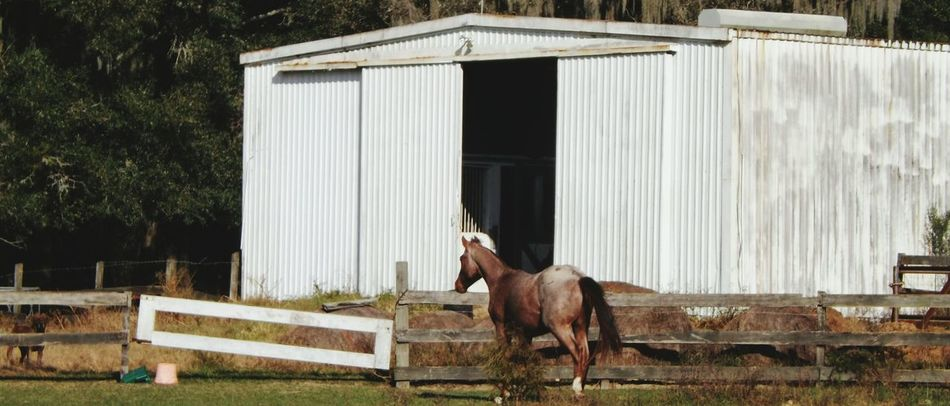 Beautiful stock photos of farm, Animal Pen, Animal Themes, Architecture, Building Exterior