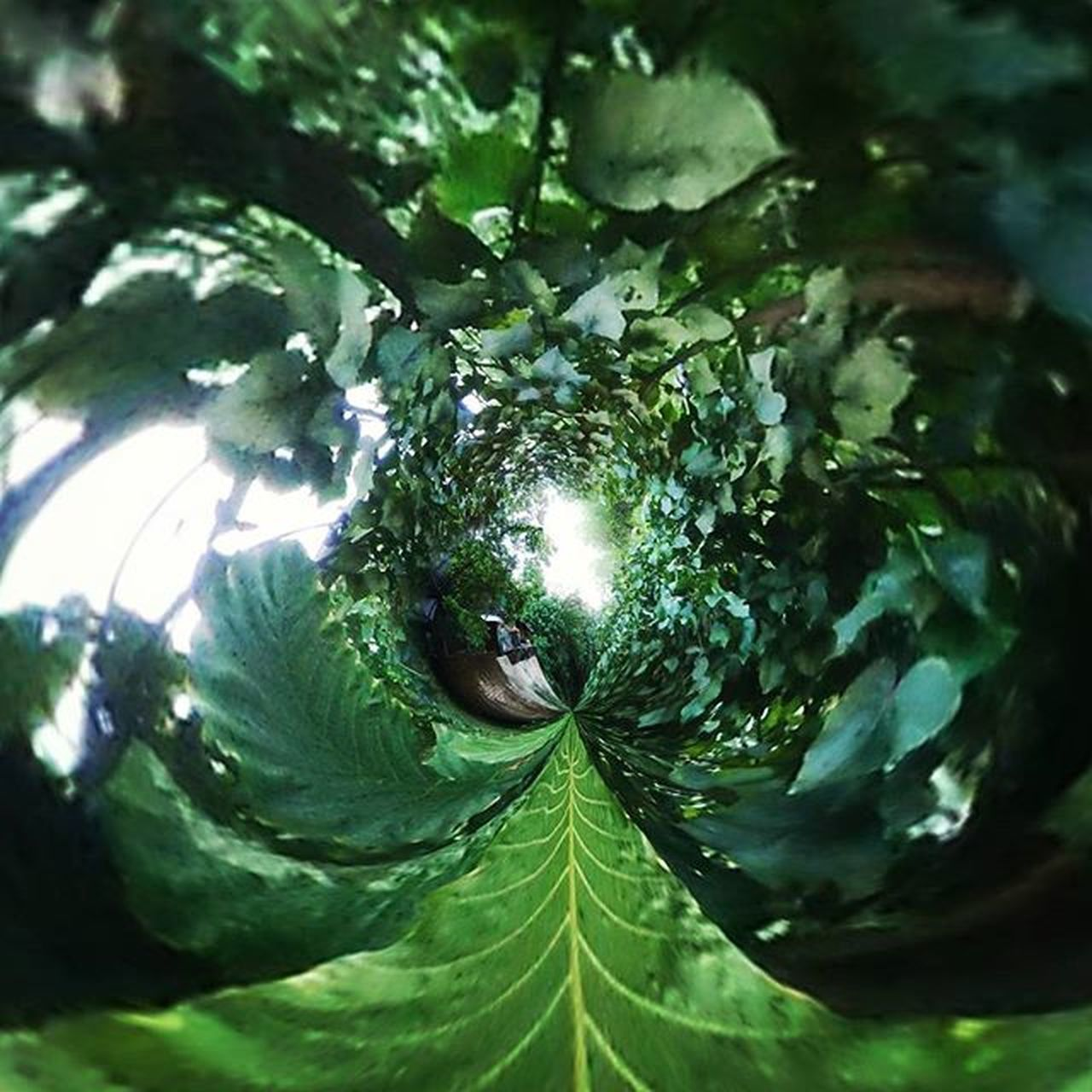 Way of Jungle. Jungle Tinyplanet Discharged Aroundtheworld Photographyoftheday Day Sun Thechoop Indonesian Culture Green Race Champion