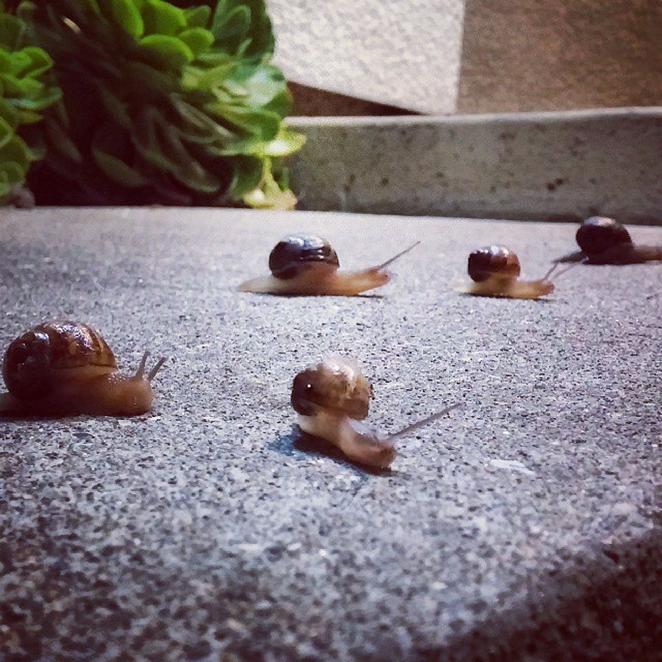 🎶The snails come out at night🎶 Snail Snailparade Snailtrail . Familynight Family Up Close Street Photography