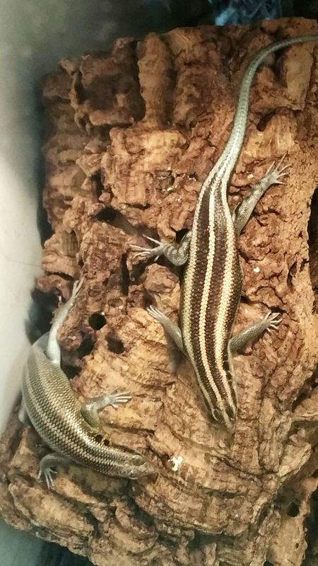 Indoors  Reptile Nature No People Animal Themes One Animal Beauty In Nature Salamander