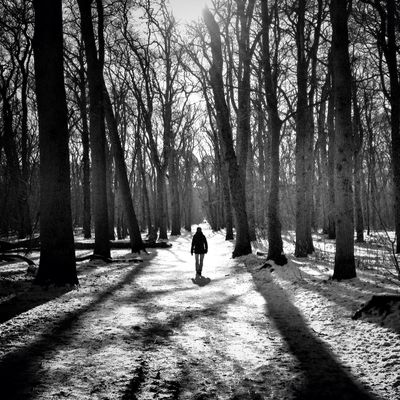 blackandwhite at Bergerbos by Johan4