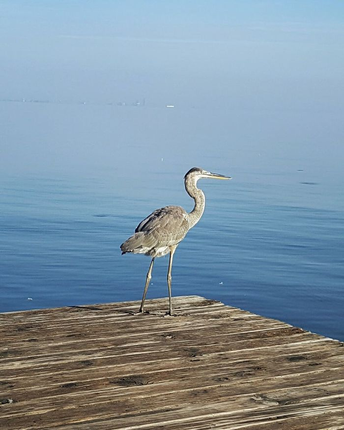 Mobile bay Fairhope