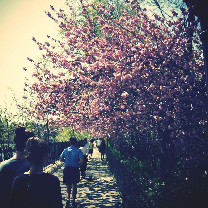 Running Blossom