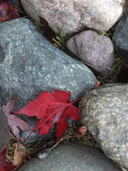 Red & Rocks, Fall Autumn Leaves Red Gray Rocks Outdoors Seasonal The Week On EyeEm