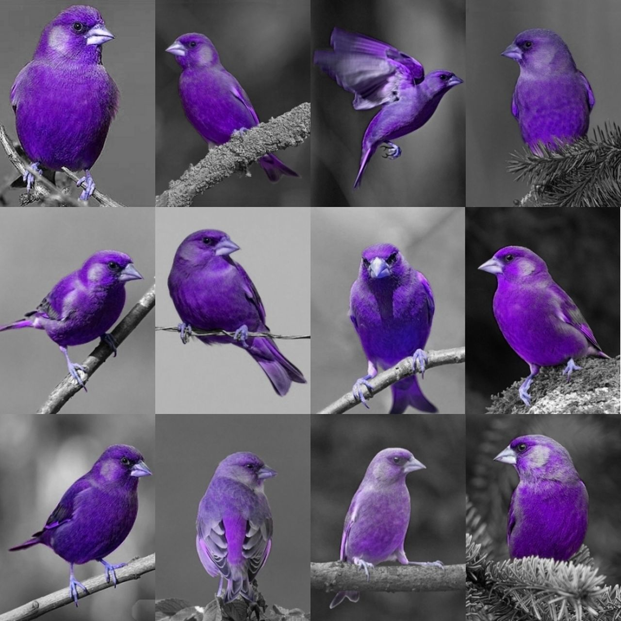Everything In Its Place Purple Birds Purple Birds🐦⛅ Birds Check This Out Enjoying Life Beautiful Modern Art Magical Amazing Today :)