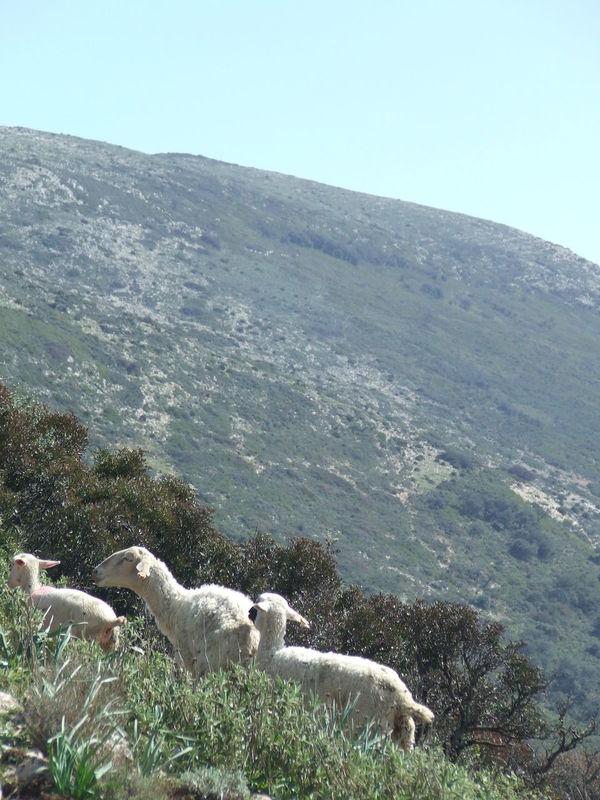 Algámitas Crag Flock Flock Of Sheep Grass Landscape Mountains Mountains And Sky Rocks Rocks And Grass Sheeps Sierra Del Tablón Stony Stony Ground Terril