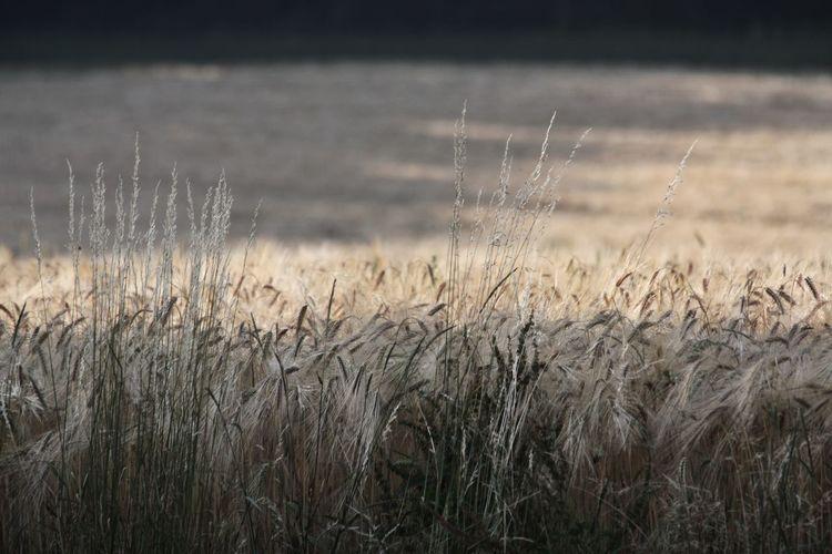 Field Depth Of Field EyeEm Best Shots Beautiful Nature Sunshine Closeup Hiking