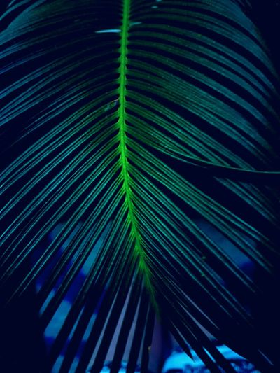 Green Color Leaf Fragility No People Full Frame Black Background Freshness Beauty In Nature Nature EyeEmNewHere