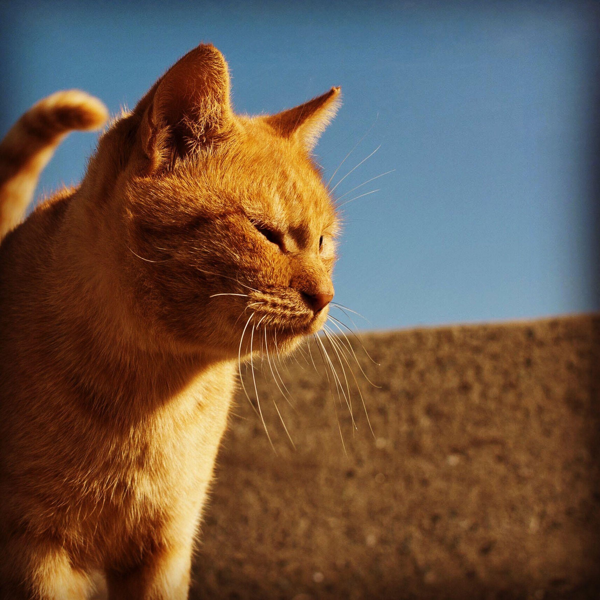 猫さん達の相島(福岡県新宮町) 猫 相島 新宮町 ねこ にゃんこ Nikon1v1 18.5mm Cat AINOSHIMA Island