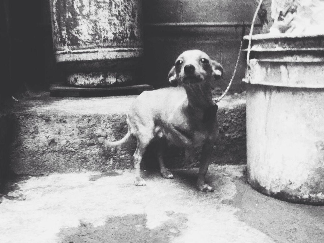 Taking Photos Enjoying Life Serious Dogslife