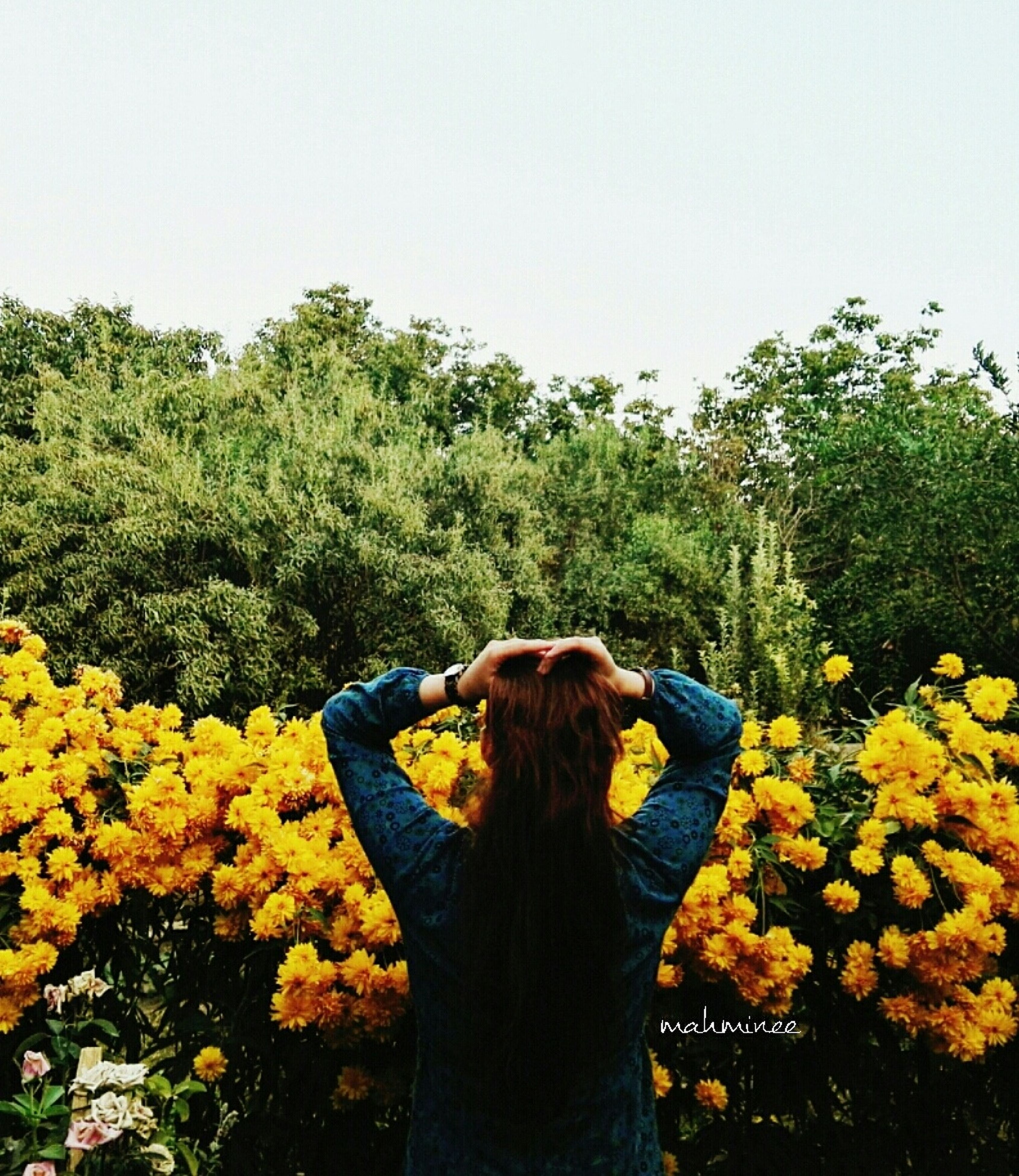 flower, long hair, rear view, waist up, yellow, leisure activity, person, casual clothing, standing, lifestyles, tree, freshness, three quarter length, young adult, beauty in nature, clear sky, growth, multi colored, bunch of flowers, nature, in front of, medium-length hair, day, tranquility, vibrant color, agriculture