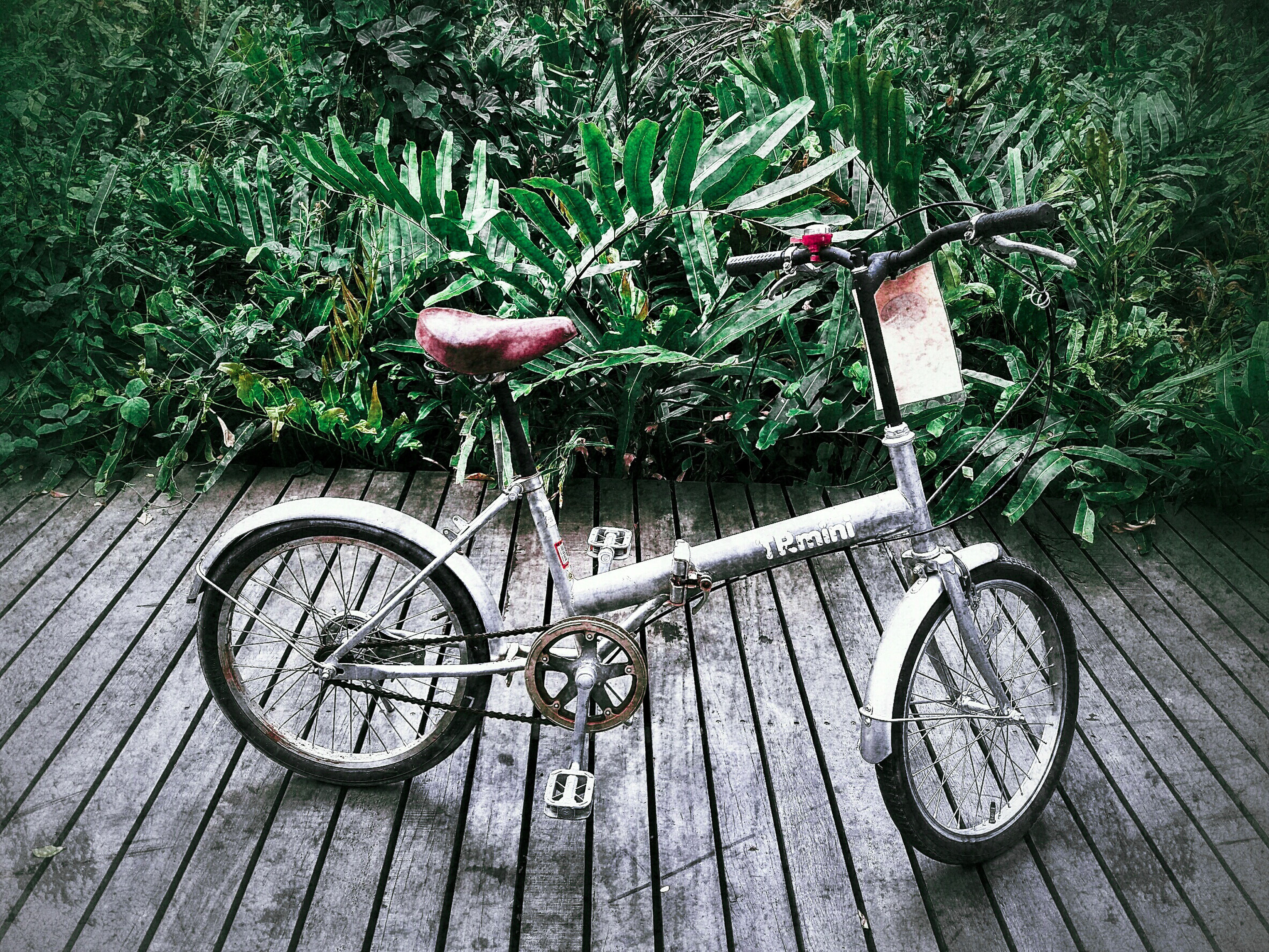 bicycle, transportation, mode of transport, stationary, land vehicle, parking, parked, tree, plant, wheel, growth, no people, outdoors, day, nature, absence, wood - material, railing, flower, cycle