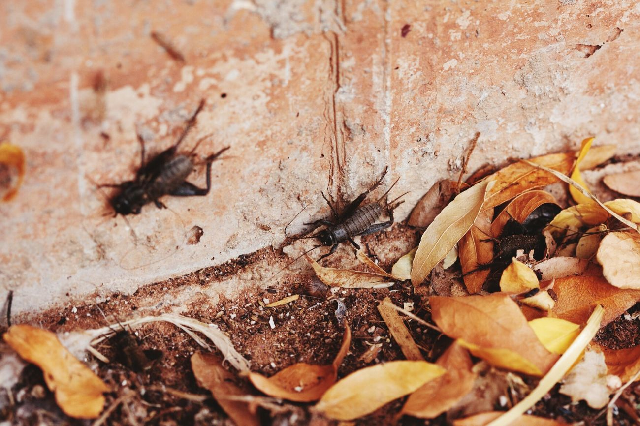 Adapted To The City Leaves Crickets Bugslife Insect Hiding From The World Hiding In Plain Sight Outdoors Nature Animals No People Close-up Utah