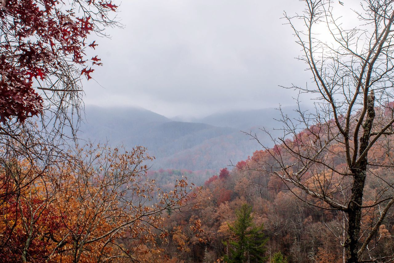 The Great Smoky Mountains the day before the fire. Tree Mountain Nature Beauty In Nature Scenics Growth Sky Outdoors Tranquility Tranquil Scene No People Landscape Mountain Range Day Branch Foreground Tennessee Smoky Mountains Laurel Falls Nature Colors Miles Away