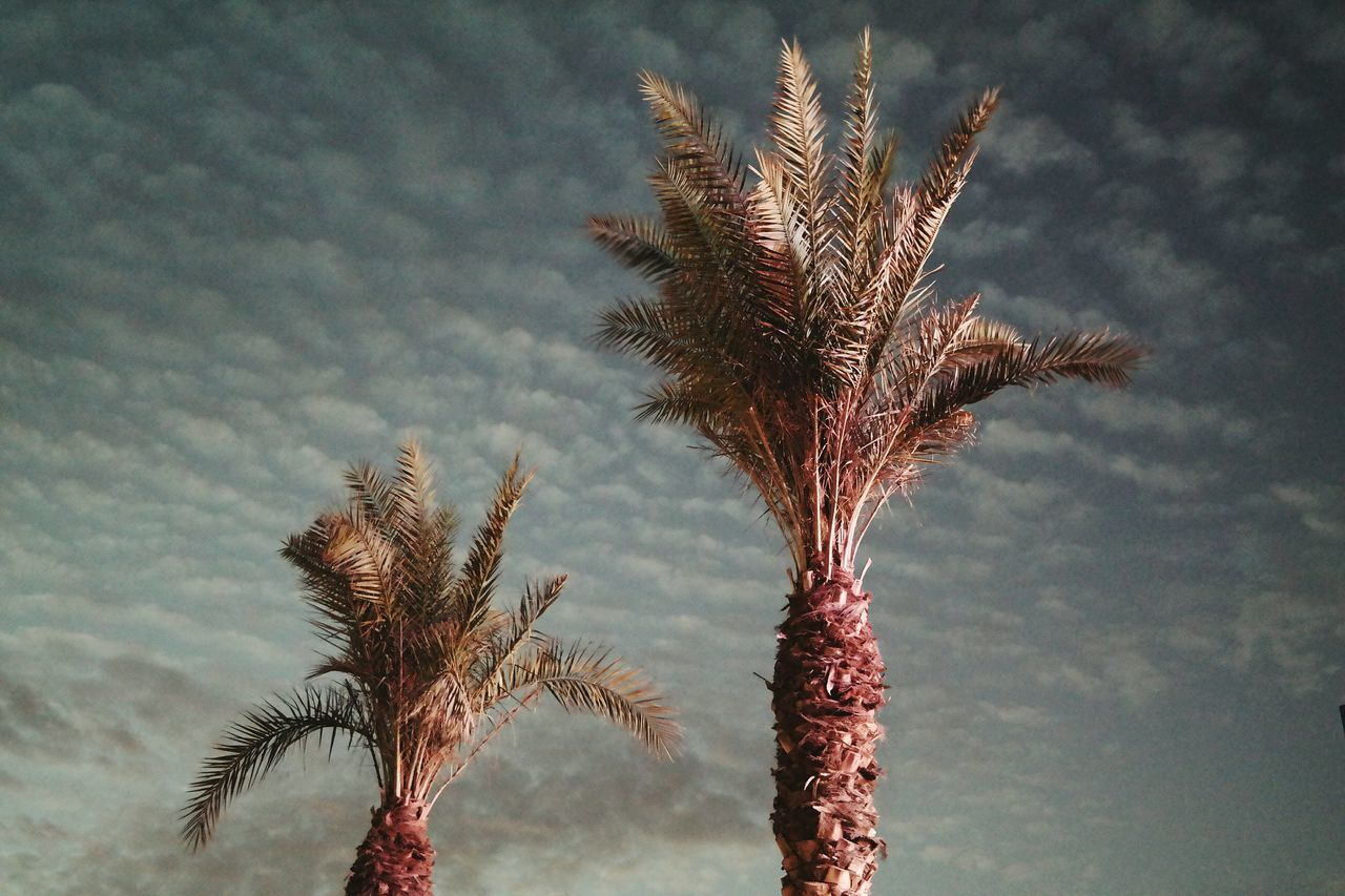 Check This Out Enjoying Life Night Lights Palm Trees Beutiful Nature Beutiful Sky
