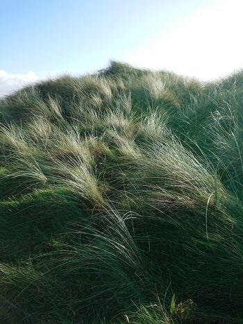Ynyslas dunes....