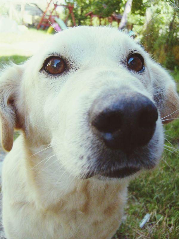 Dog Dogslife Cute
