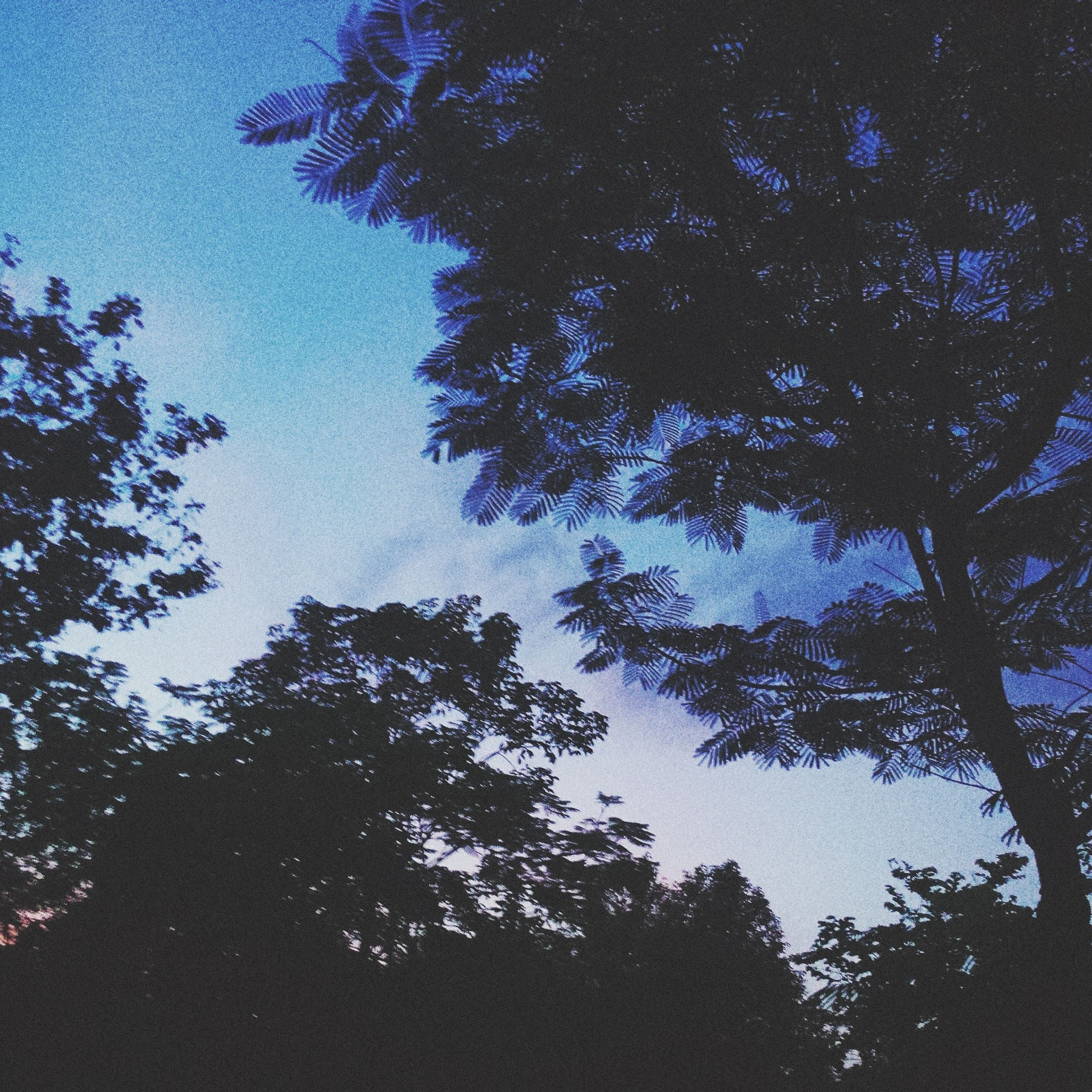 tree, low angle view, growth, branch, silhouette, tranquility, sky, nature, beauty in nature, blue, scenics, tranquil scene, clear sky, outdoors, no people, high section, day, idyllic, treetop