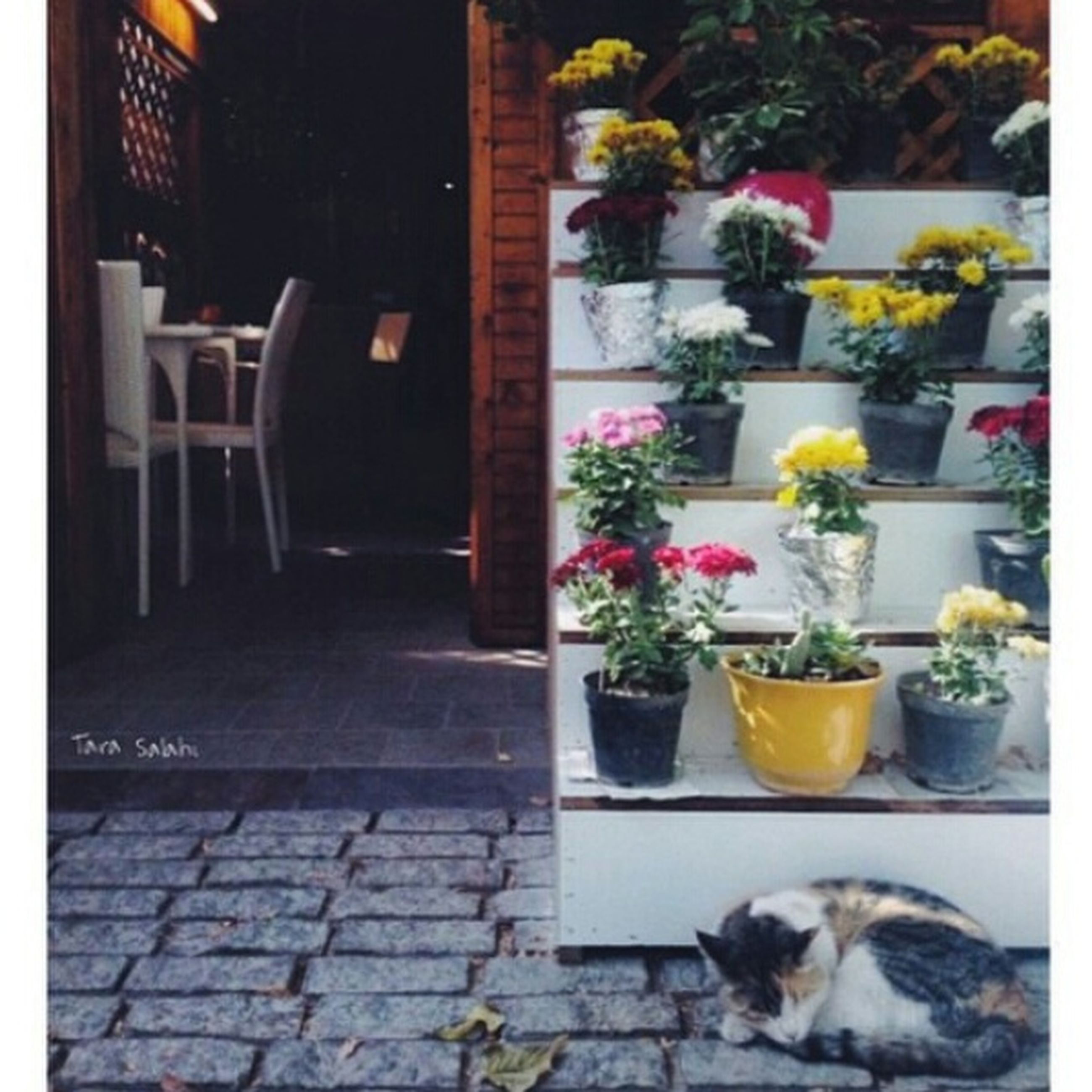 pets, potted plant, domestic animals, domestic cat, animal themes, cat, one animal, built structure, architecture, mammal, building exterior, flower, plant, house, flower pot, window, tiled floor, feline, no people, cobblestone