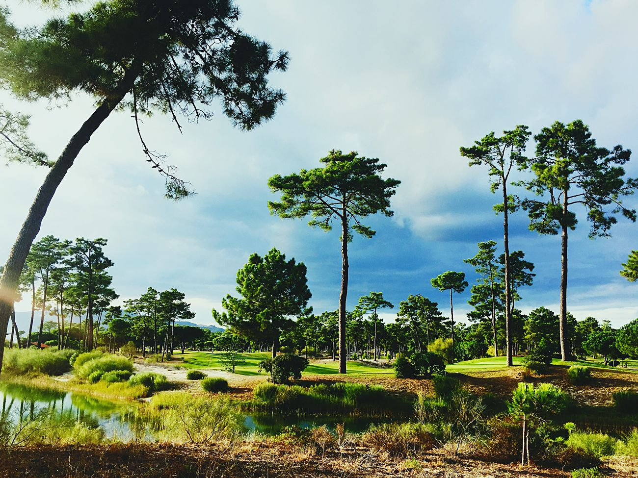 Portugal Troia Portugal Troia Golfclub Forest Green Green Green!  Nature Nature Beauty Trees And Sky Tranquility Having A Good Time Having A Drink Green Color Tranquil Scene Cloud - Sky Great View Amazing View Awsome Day ♥ Taking Photos