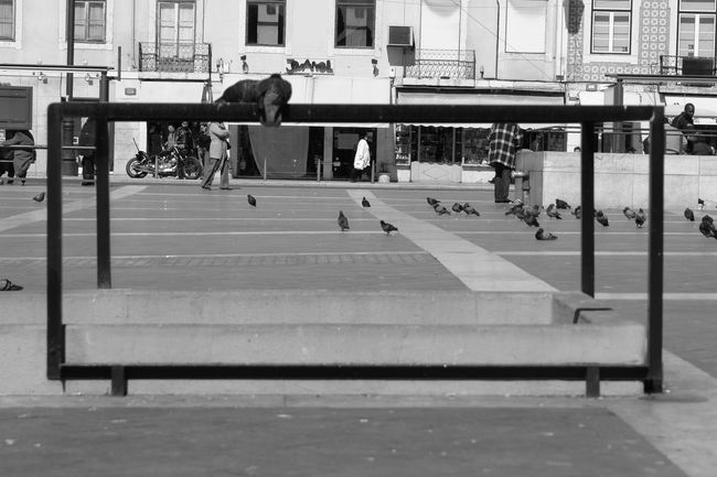 Bench City Life Empty Footpath Full Length Leading Leisure Activity Lifestyles Men Narrow Park Real People Rear View Selective Focus Shadow Sitting Street The Way Forward Urban Walking Women