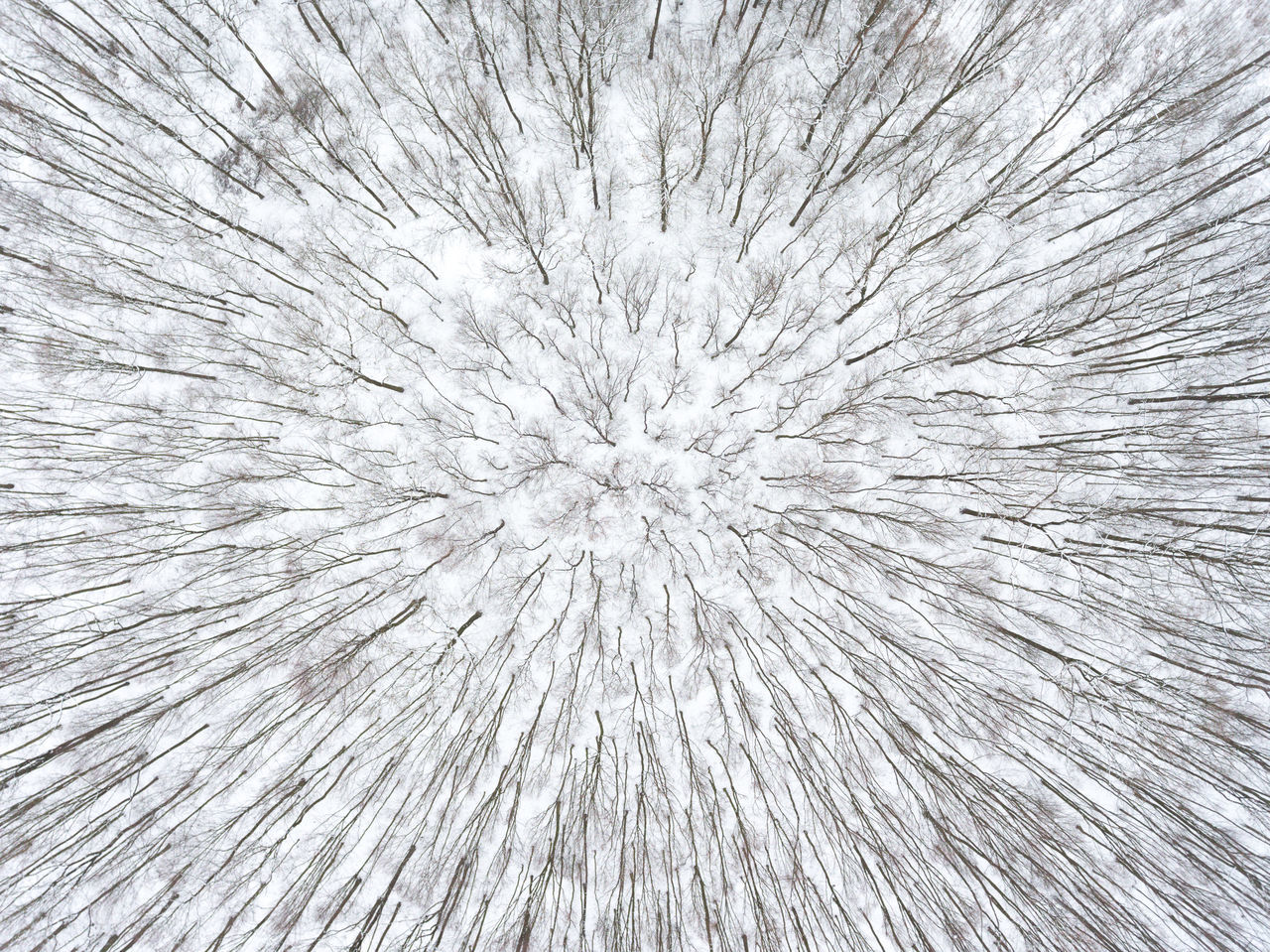 Top down view on a forest at winter day with naked trees forming radial patterns aerial view altitude backgrounds beauty in Nature cold day down Farm Freshness full frame Growth height Ice Nature no people outdoors park radial snow Textured Flying High