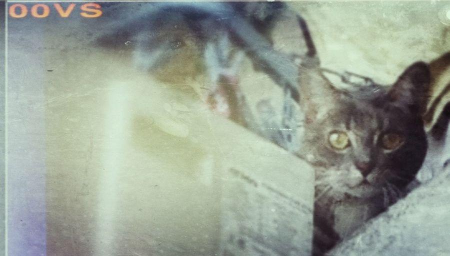 Cat Popckorn