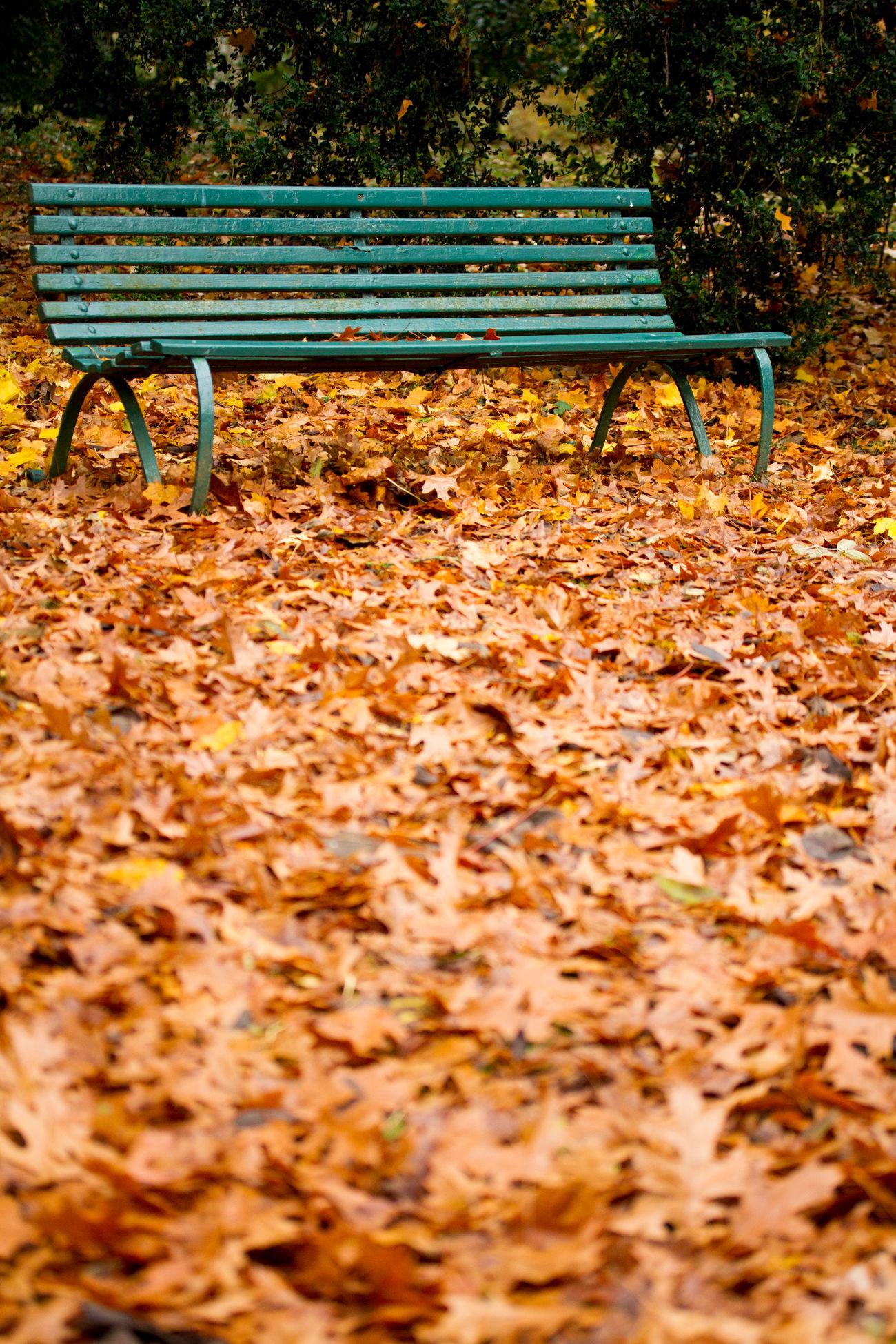 Autumn Autumn Colors Autumn Leaves Bench Golden Green Park