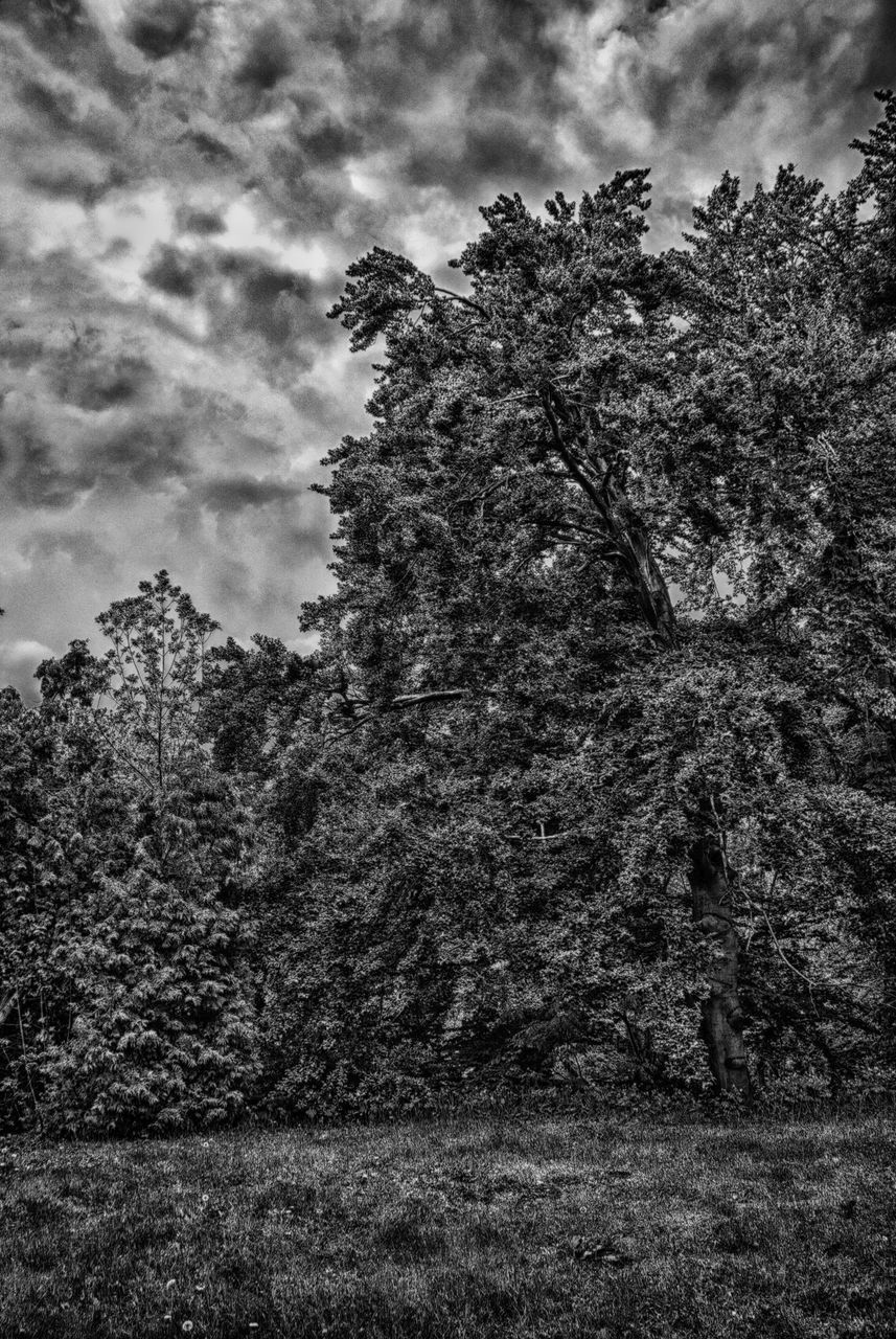 tree, growth, nature, sky, no people, forest, outdoors, plant, beauty in nature, day, grass
