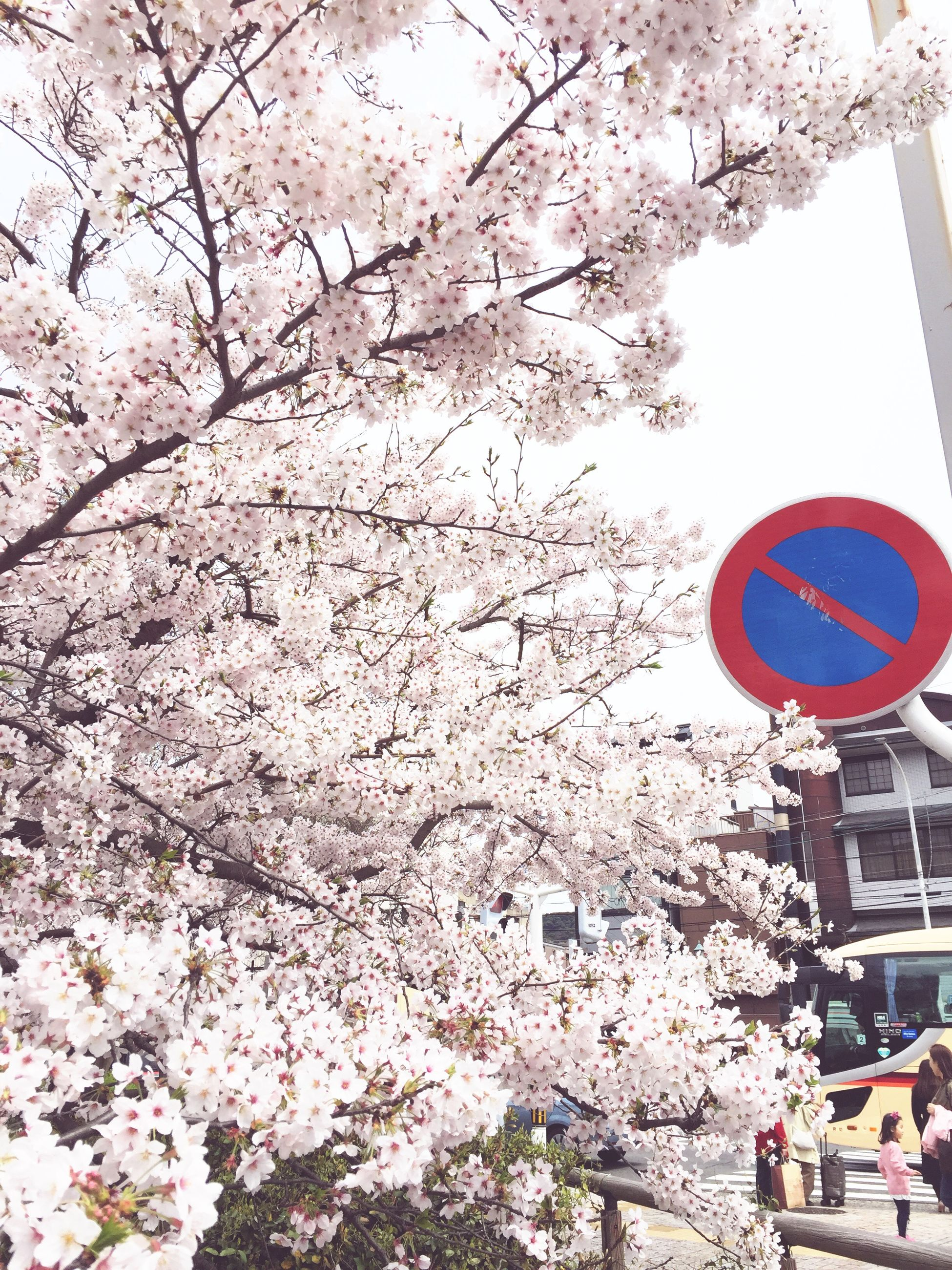 flower, tree, building exterior, architecture, built structure, branch, low angle view, cherry blossom, cherry tree, blossom, freshness, white color, fragility, growth, day, nature, city, outdoors, pink color, springtime