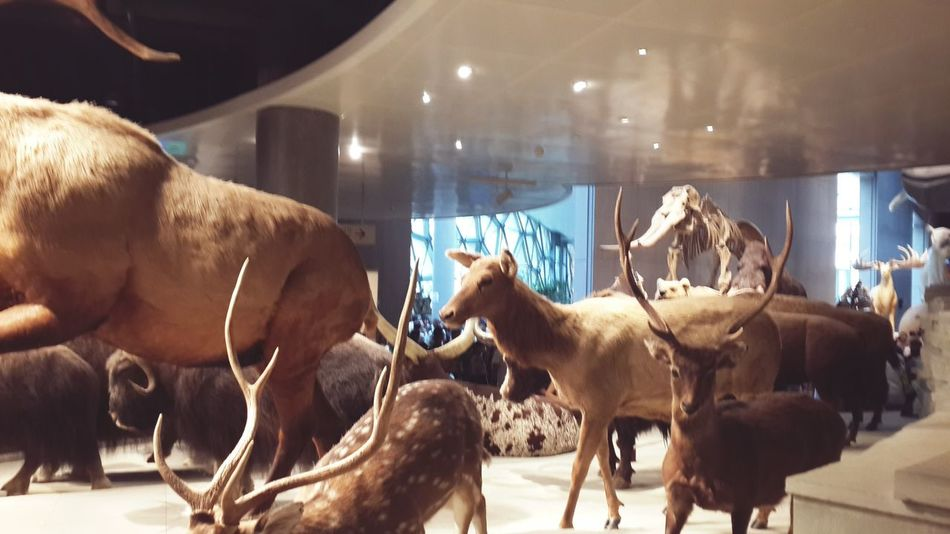 Shanghai Shanghai Natural History Museum Hello World Enjoying Life Taking Photos Details Of My Life My Life