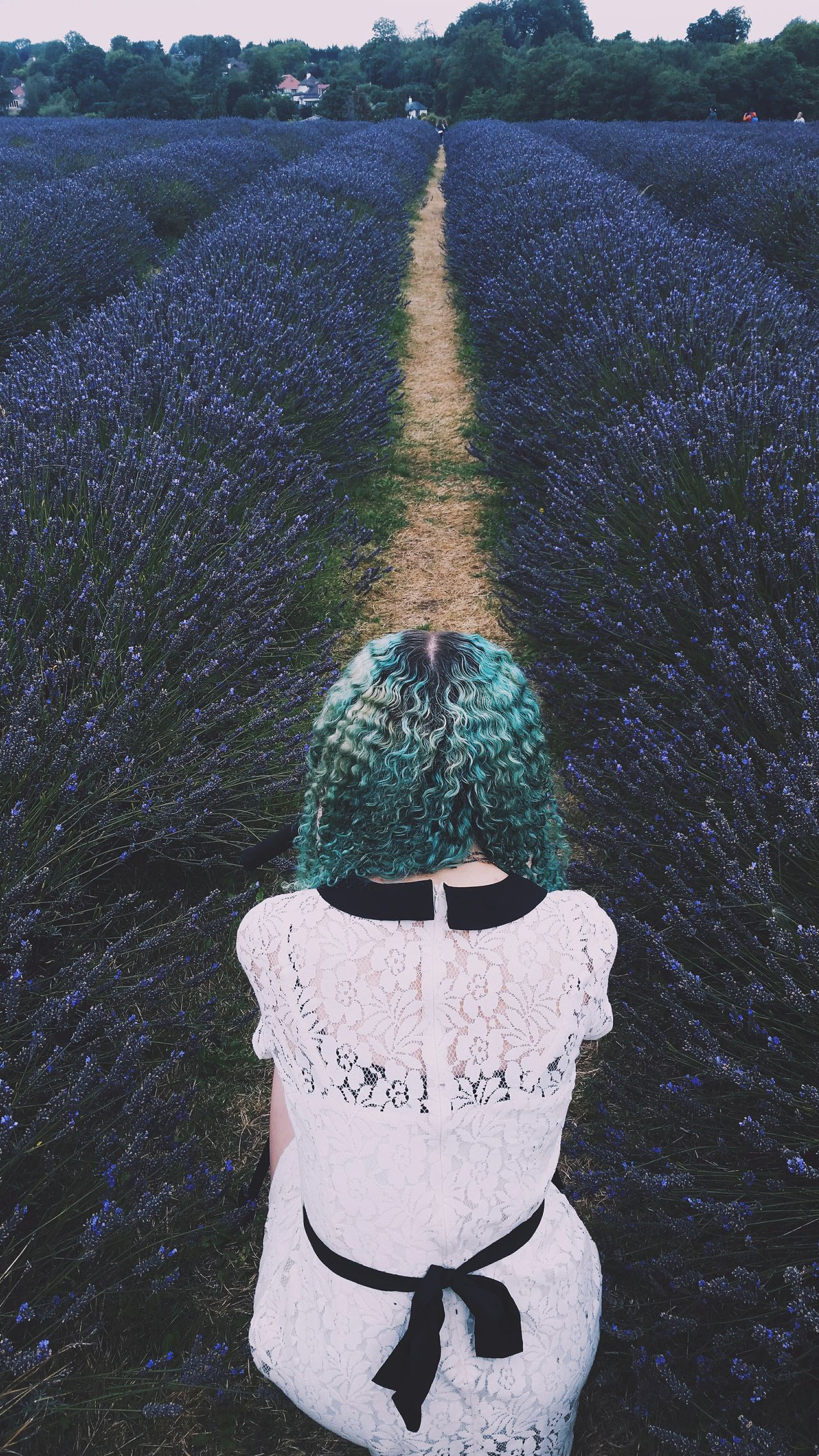 Lavender fields. Lavender United Kingdom England VSCO Lavenderfarm Summer Greenhair Lace Flowers Model