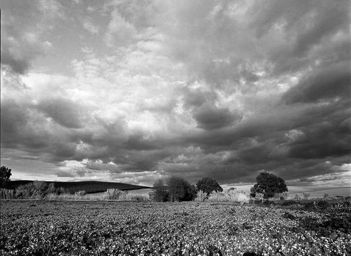 Landscape Agriculture Tranquility