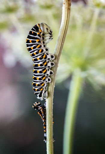 Animal Themes Animal Wildlife Animals In The Wild Beauty In Nature Close-up Day Full Length Insect Nature No People One Animal Outdoors