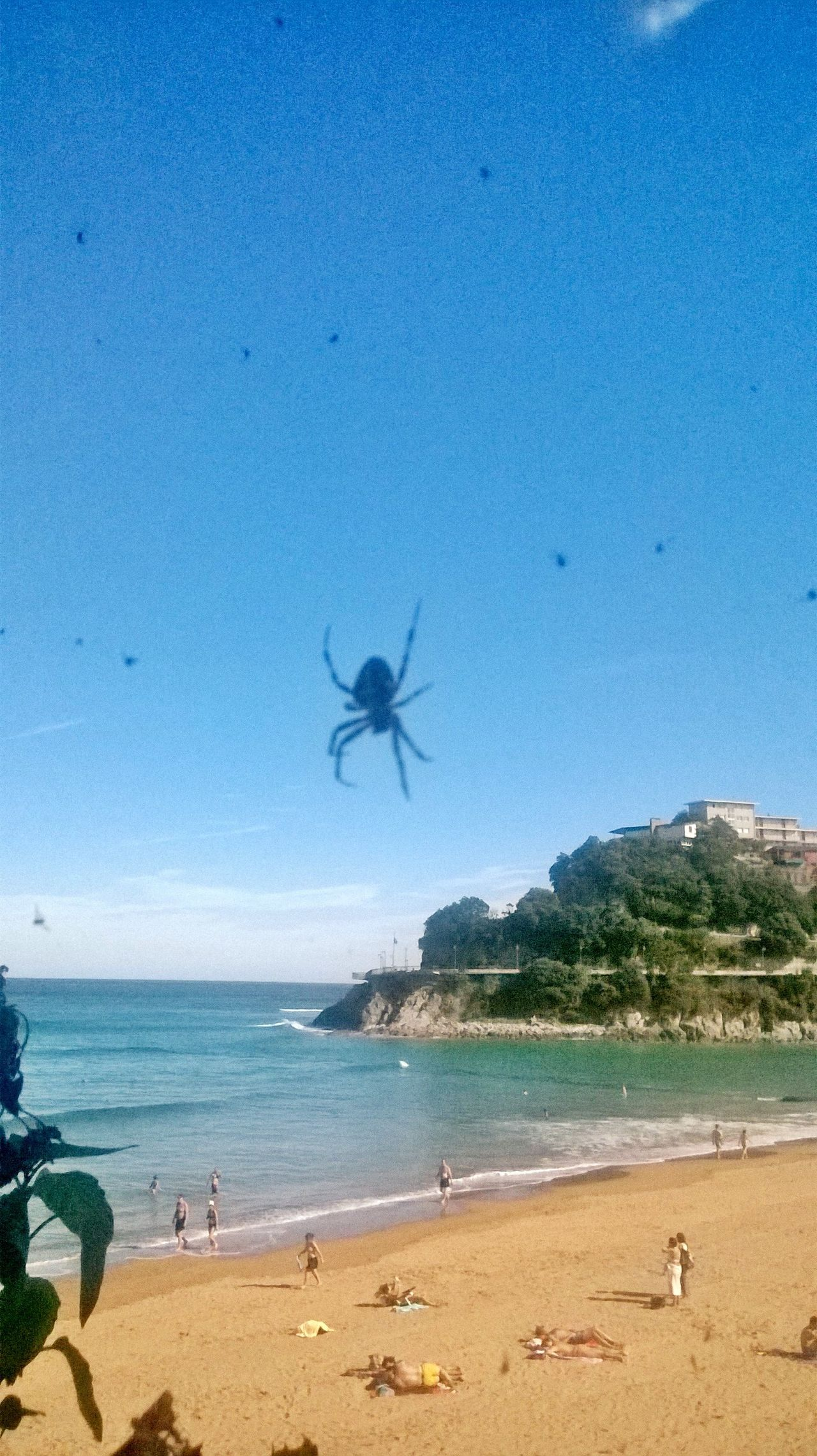 Blue Sea Beach Water Animal Themes Nature Day No People Eyem Collection Palm Tree Sky Outdoors Pueblos De España Beauty In Nature EyeEm EyeEmNewHereSpider Spider Invasion Lekitio Playa De Lekeitio Summer Verano Arachnophobia Traveling Home For The Holidays Adapted To The City