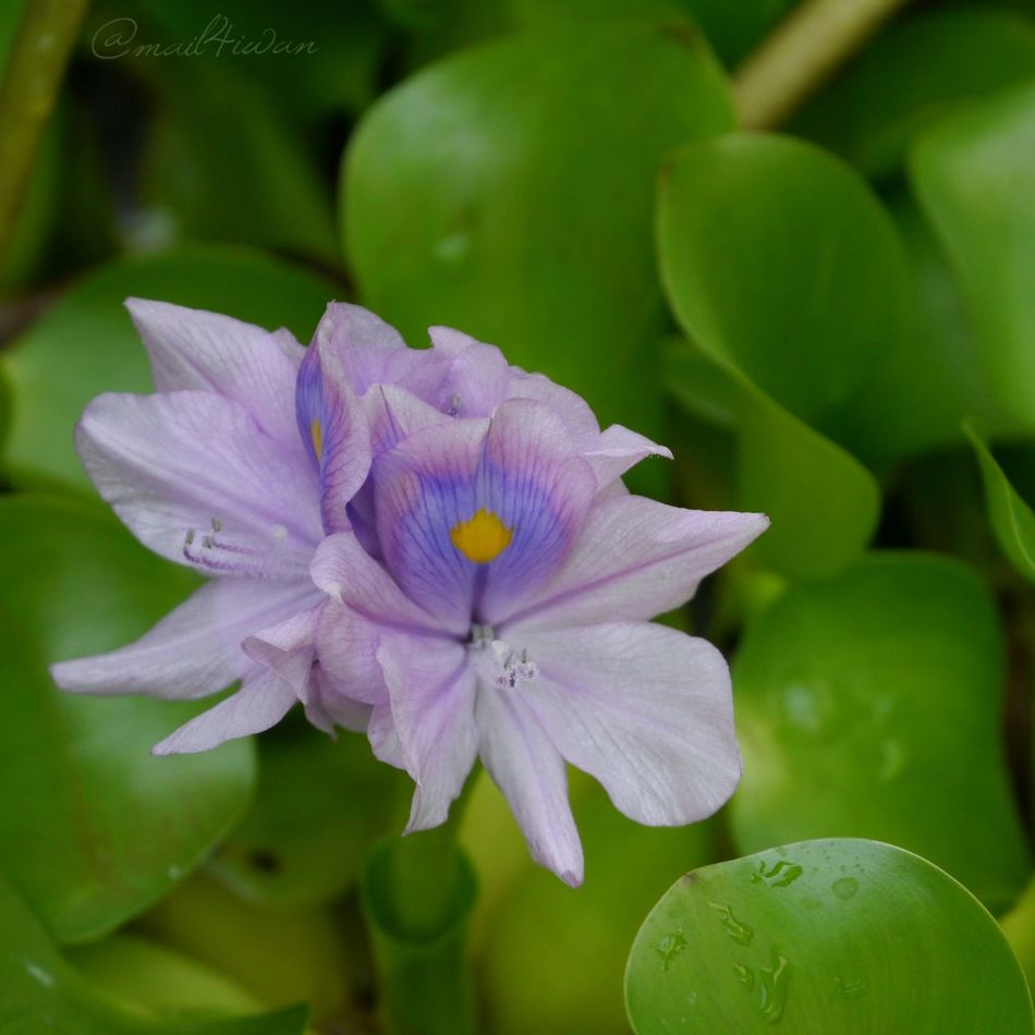 Flower Beauty In Nature Petal Nature Fragility Flower Head Plant Purple Close-up Freshness No People Outdoors Green Color Leaf Day Growth Beauty