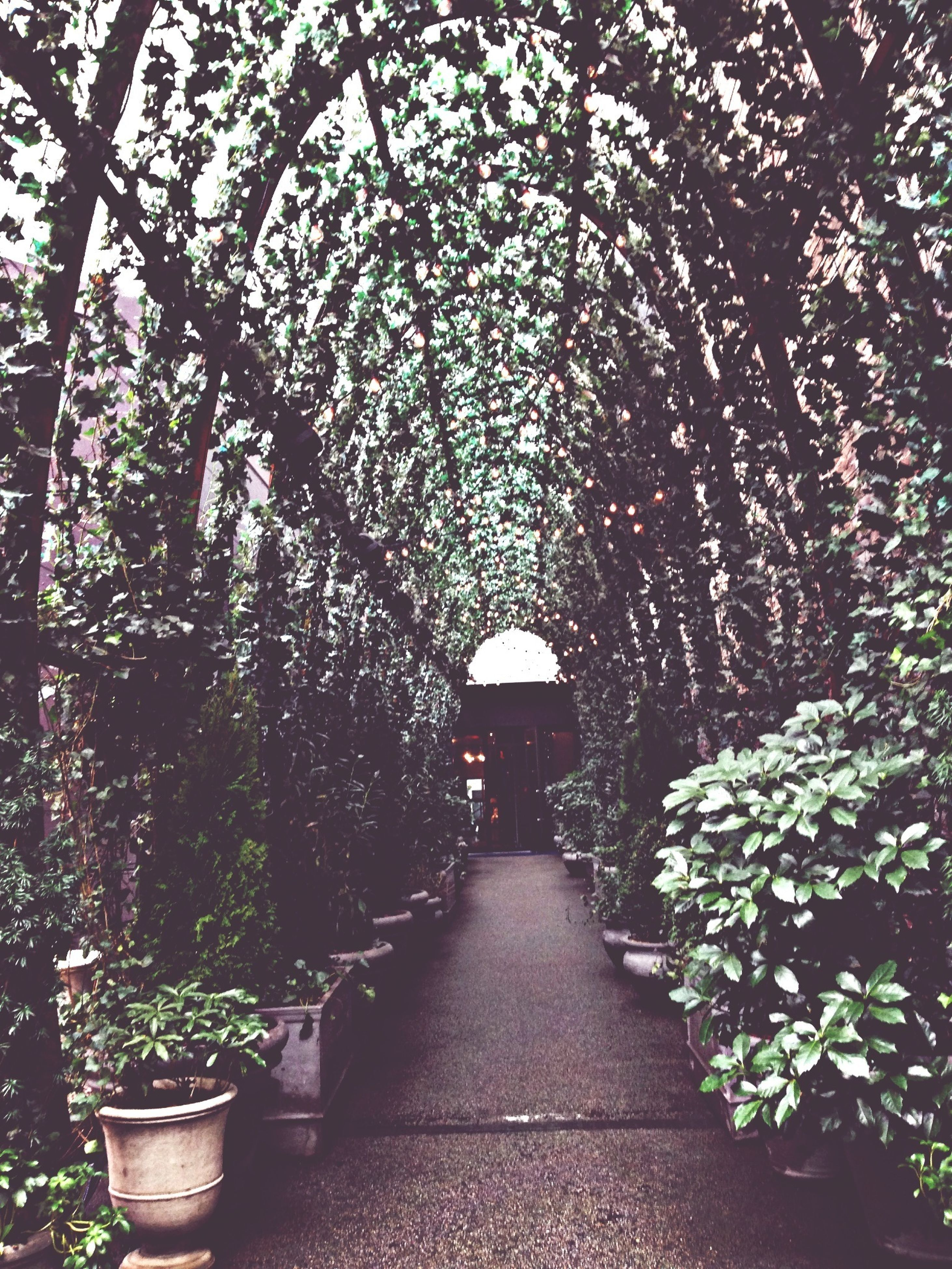 tree, the way forward, growth, diminishing perspective, built structure, arch, plant, nature, architecture, branch, vanishing point, footpath, flower, walkway, lighting equipment, park - man made space, tranquility, no people, outdoors, day