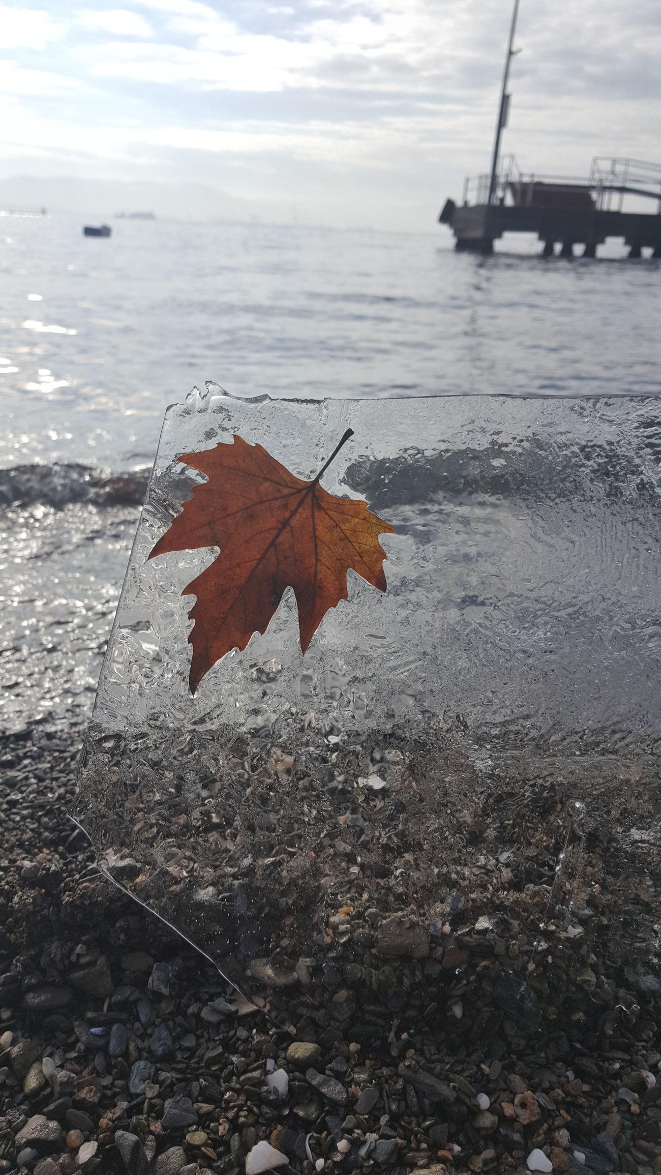 Sea Seashore Leaf 🍂 Sand Nature Beauty In Nature Ice First Eyeem Photo