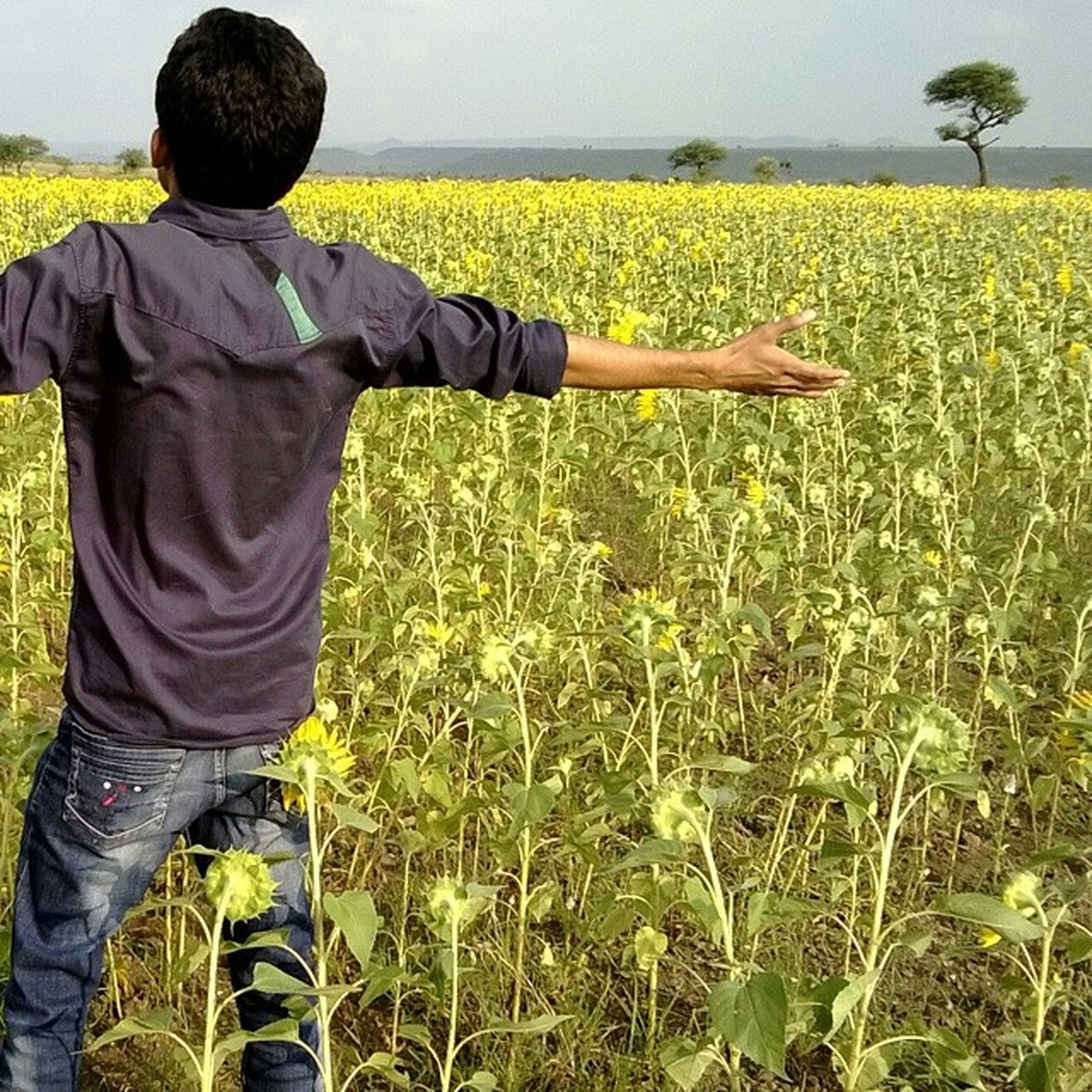 lifestyles, leisure activity, men, field, standing, agriculture, rear view, casual clothing, holding, grass, rural scene, yellow, growth, landscape, plant, green color, nature, farm