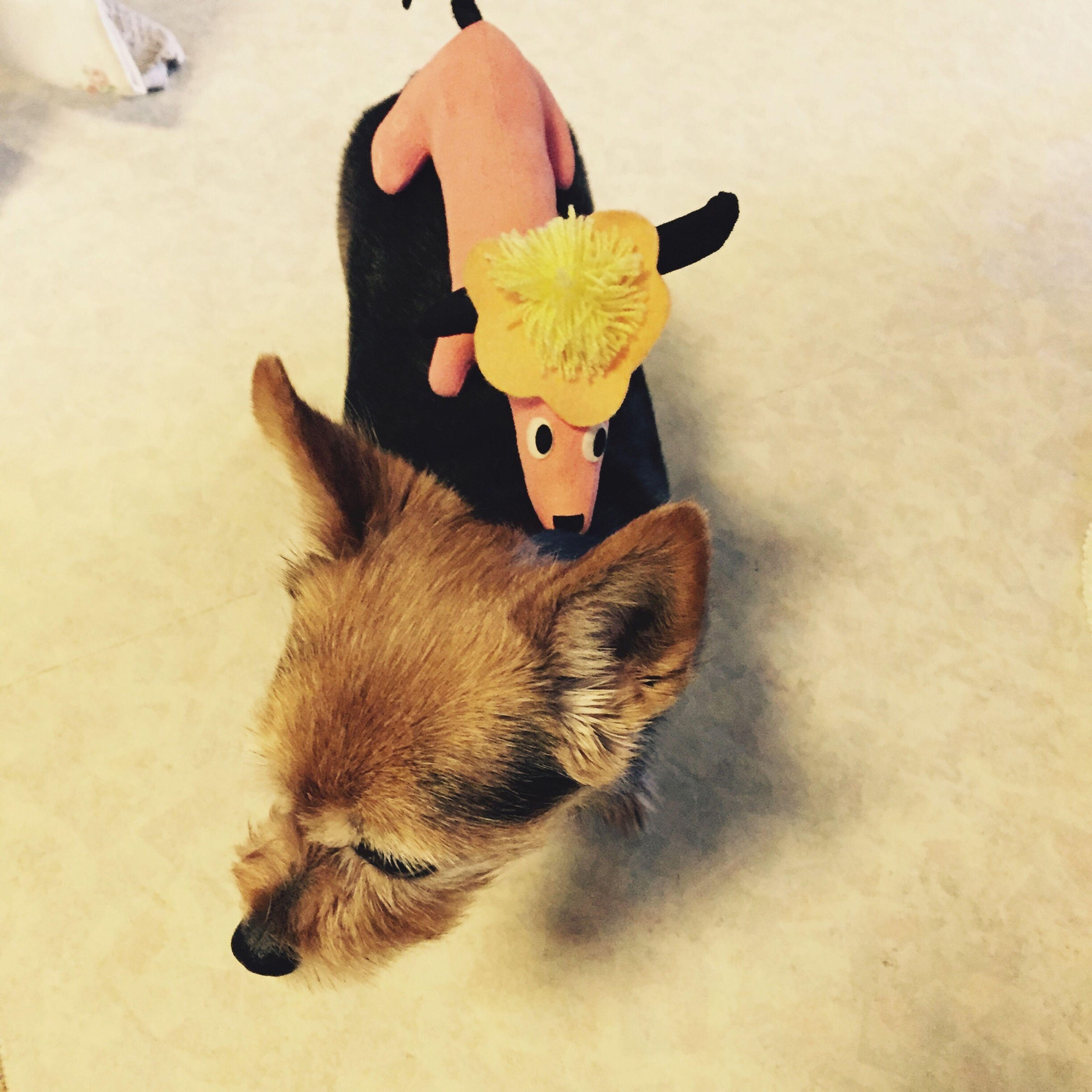 Put The Dog Dog Cute♡ 乗せ犬 犬