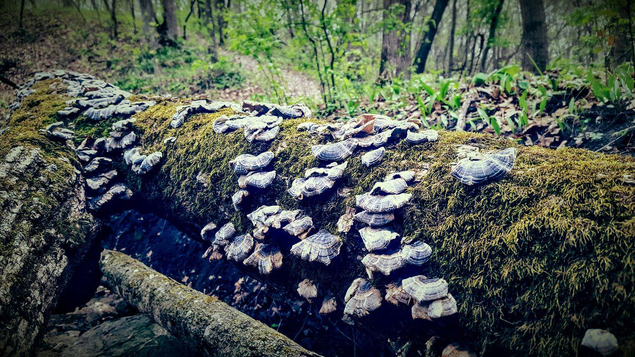 Fungi Logginaround Springtime Minnesota Nature Gloomyday