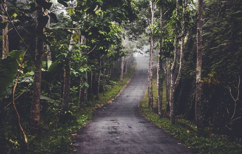 Beautiful stock photos of bali, Day, Empty Road, Forest, Growth