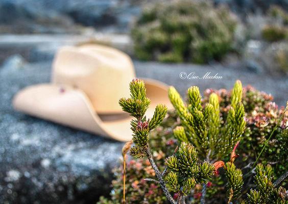Photo by Que Mazlan