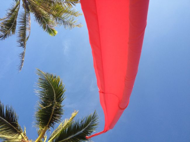 Landscapes With WhiteWall Summer Looking Up Palm Trees Blue Sky Red Flag Looking Up Can Be So Rewarding At The Beach Enjoying Life Feeling Calm Wind Blowing  Such A Lovely Moment in Koh Samui Thailand Vacation Spotted In Thailand Showcase April