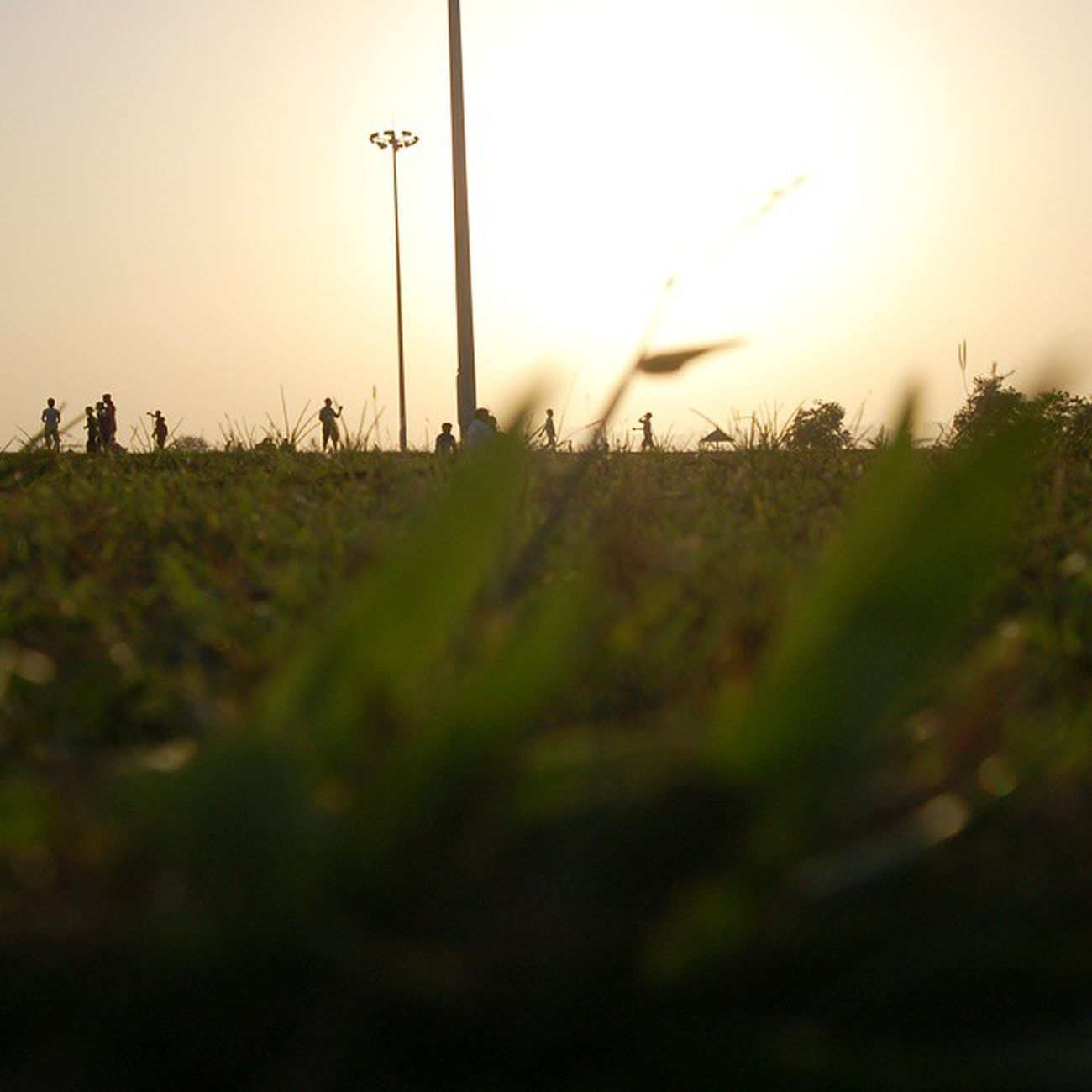 Capturing the sunset through the eyes of the blades of grass at Nisarg Udyaan. DSLR's Day Out. ^.^ Photography PlayingWithFocus Sunset DSLR ClintonRodriguesPhotography