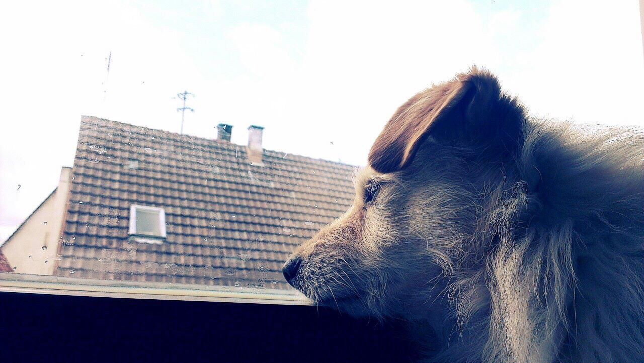 dog, pets, one animal, domestic animals, animal themes, mammal, no people, close-up, day, building exterior, indoors, architecture, sky
