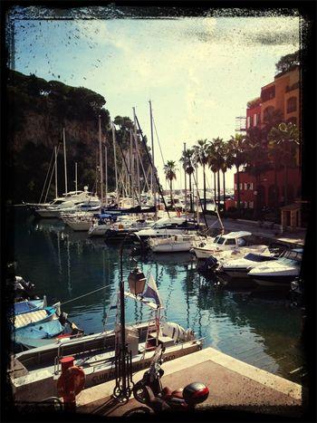 Harbour Boats Palmtree Monaco